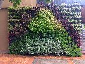 Green Wall - Vertical Garden - Geometric Figures