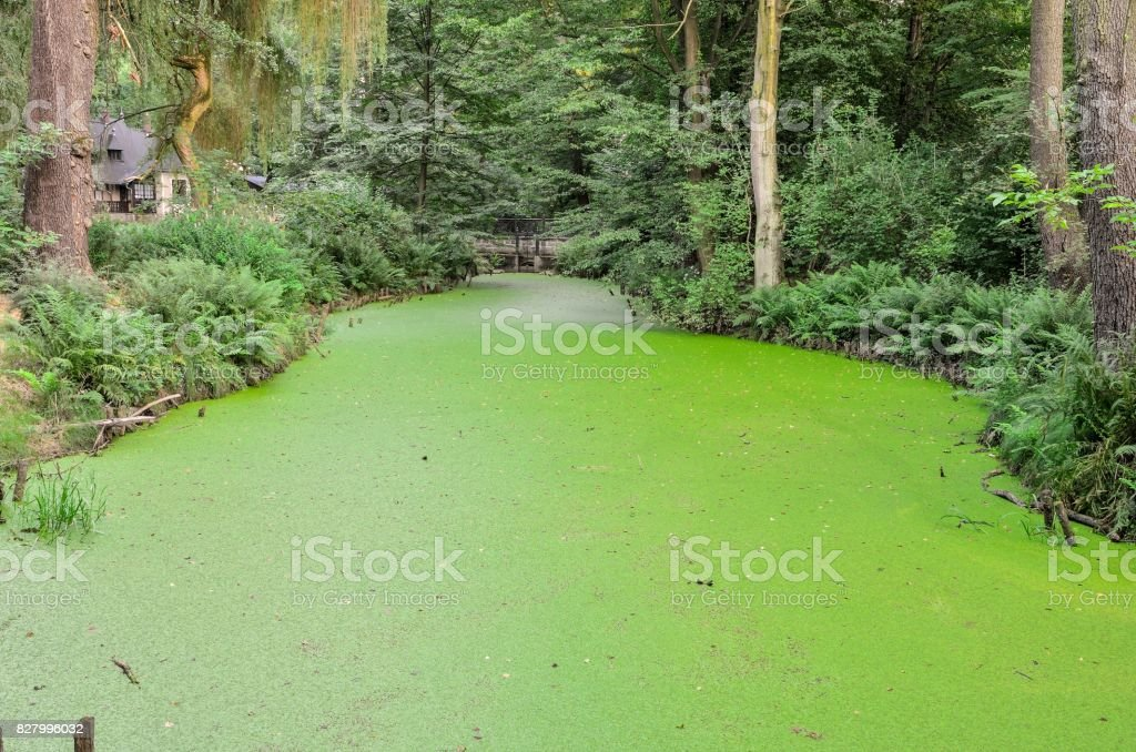 Green water and plant. stock photo