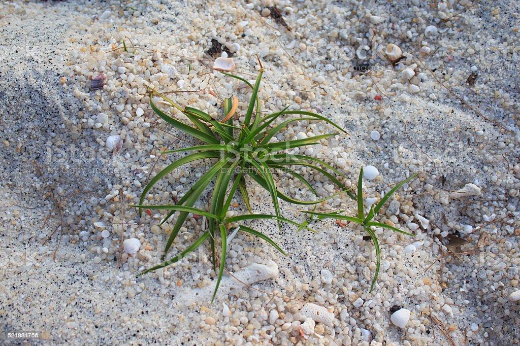 Зеленая вода трава завод на белом песчаном пляже Стоковые фото Стоковая фотография