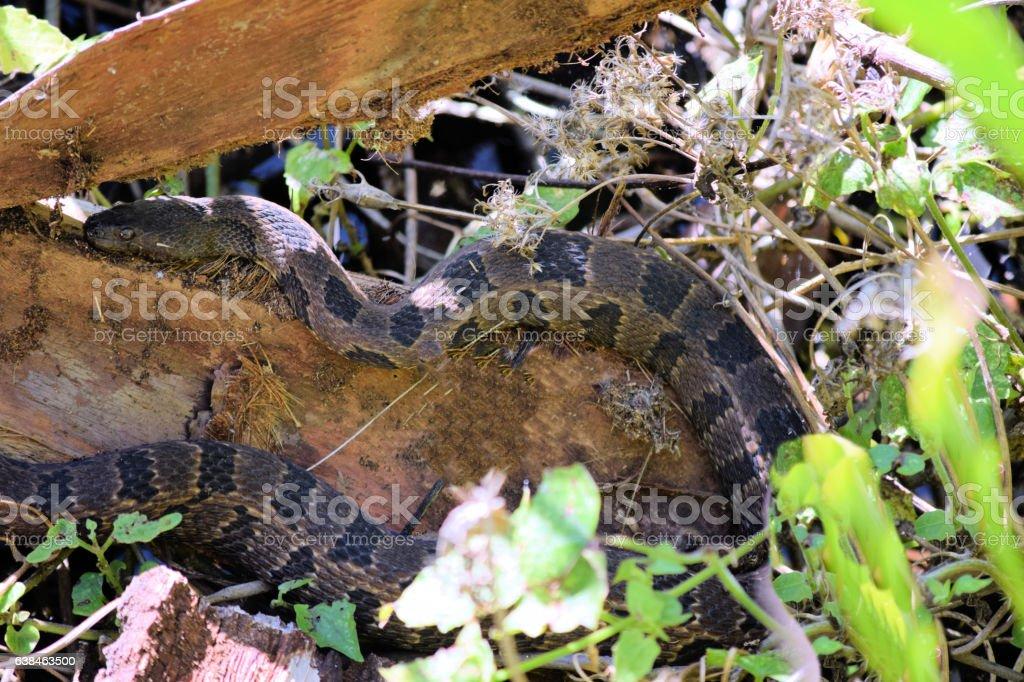 Green Water Snake stock photo
