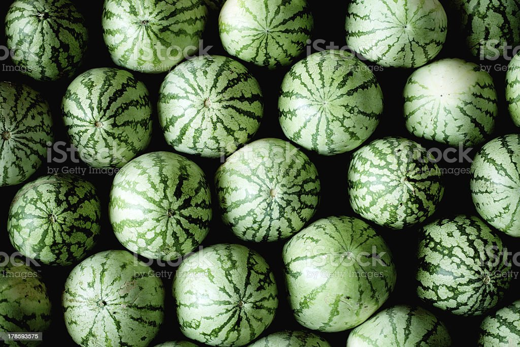 Green watermelons royalty-free stock photo