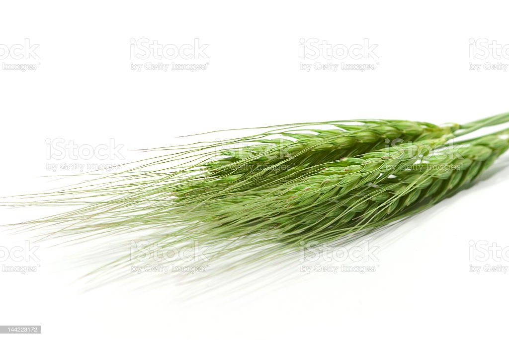 Green wheat ears isolated on white royalty-free stock photo