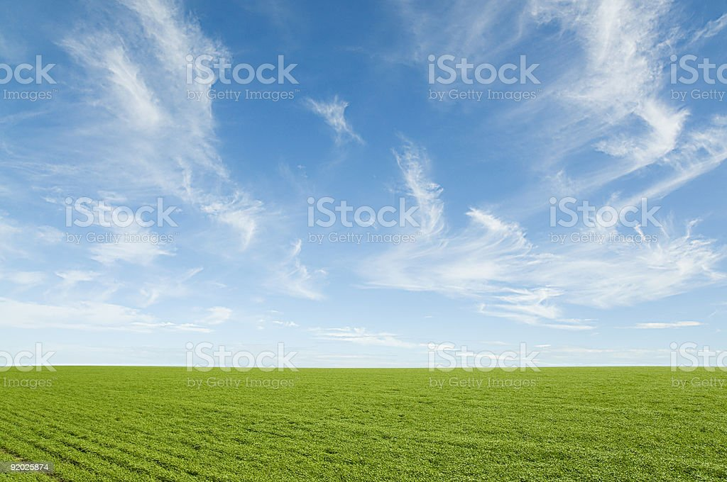 Green Wheat Fields and Soft Cirrus Clouds stock photo