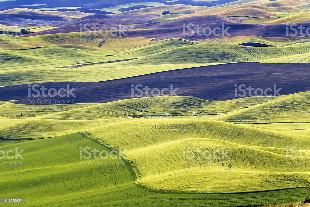 Green Wheat Fields Black Land Patterns Palouse Washington stock photo