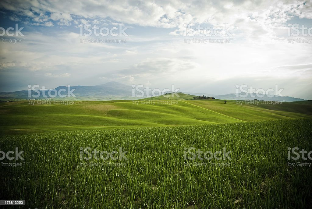 Green Wheat Fields in Tuscany royalty-free stock photo
