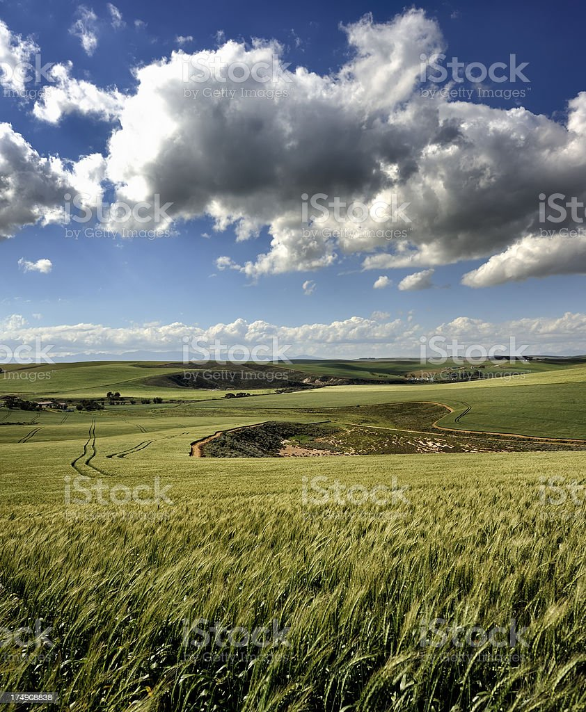 Green wheatfields and clouds stock photo