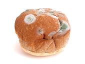 Green White Bread Mold On Bun Food Dinner Roll Fungus
