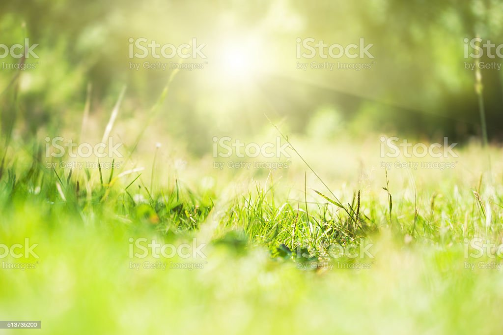 Green wild grass on a forest meadow. stock photo