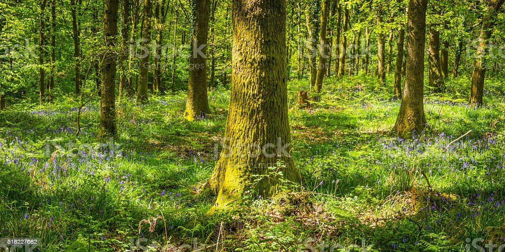 Green wildflower woodland vibrant spring forest foliage in idyllic glade stock photo