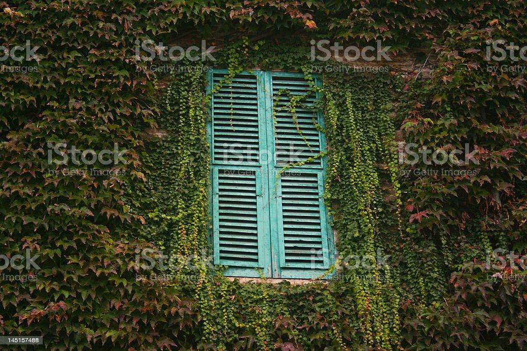 Green window 2 royalty-free stock photo
