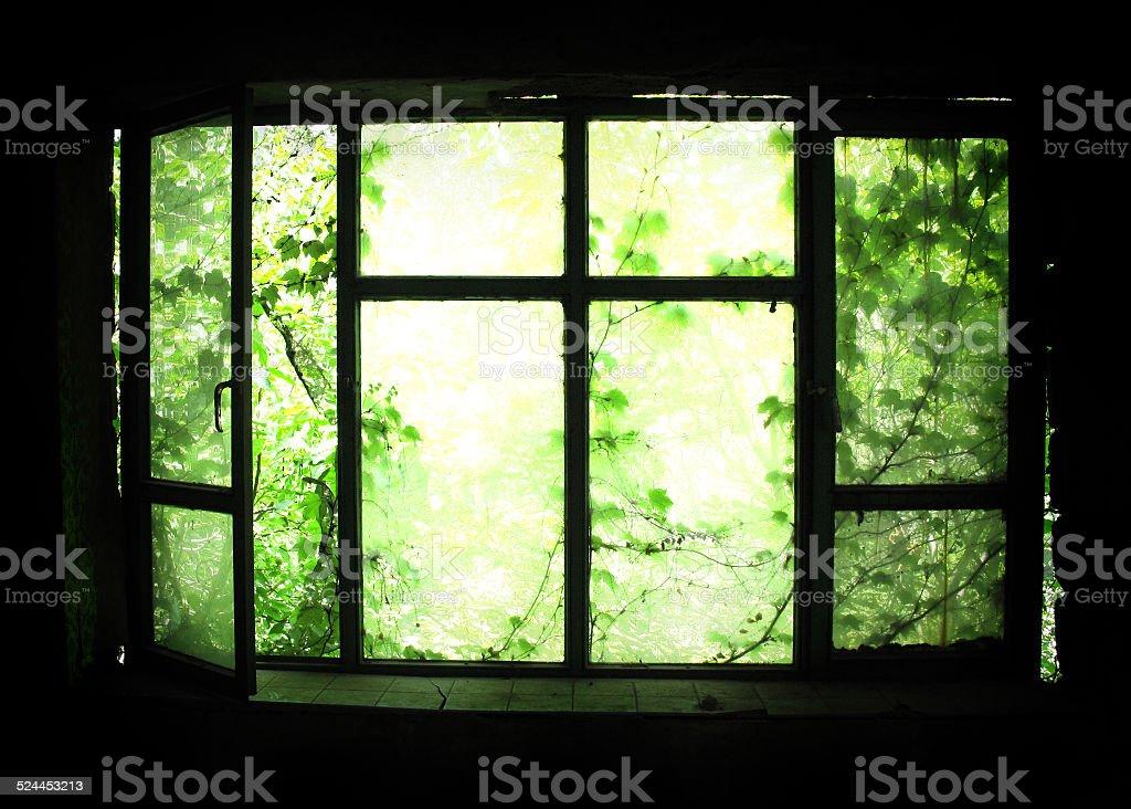 Vert fenêtre photo libre de droits