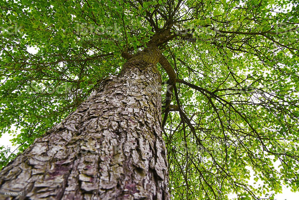 Green wood. stock photo