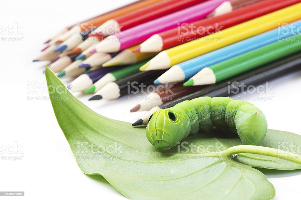 Green worm on crayons stock photo