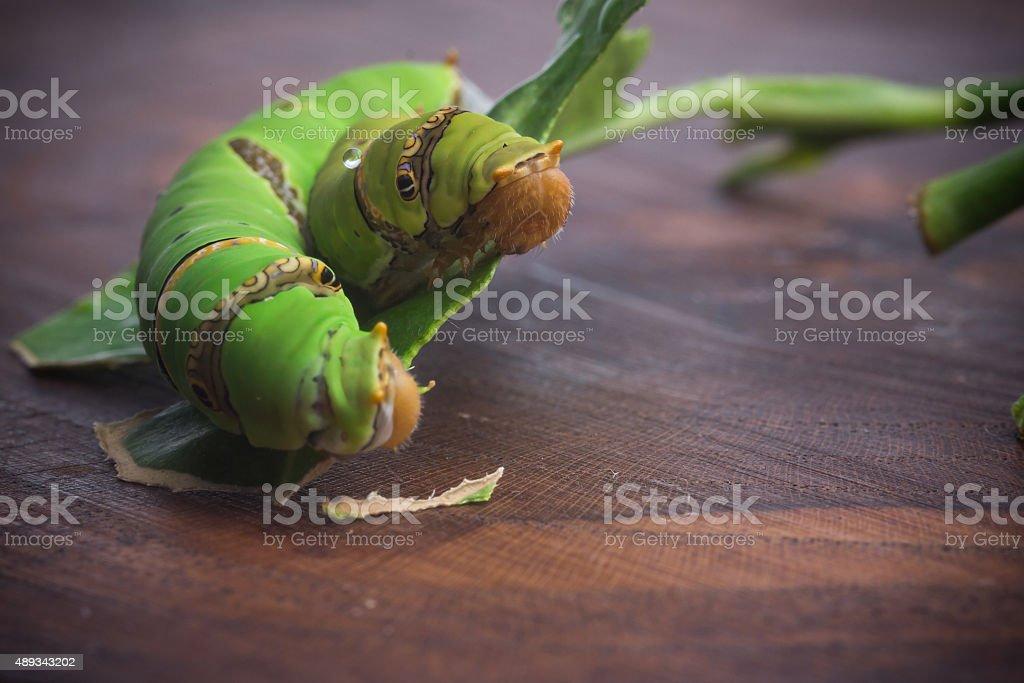 Green worm stock photo