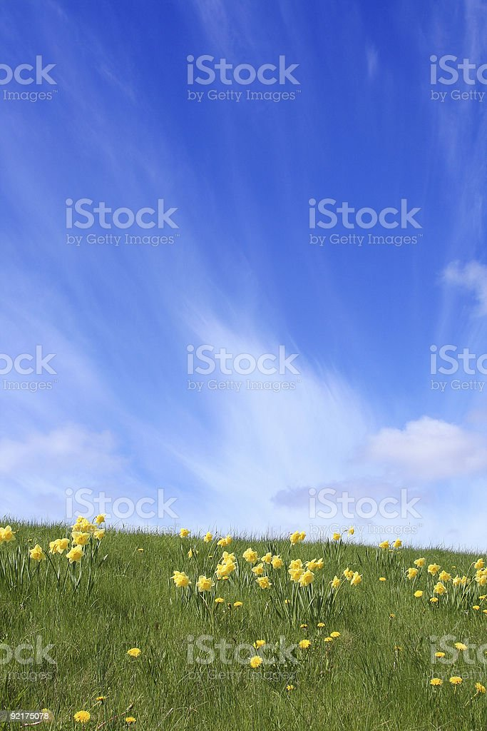 Green, Yellow And Blue royalty-free stock photo
