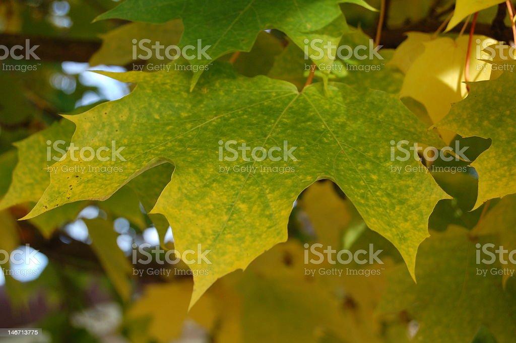 Grün gelben Blätter Hintergrund Lizenzfreies stock-foto