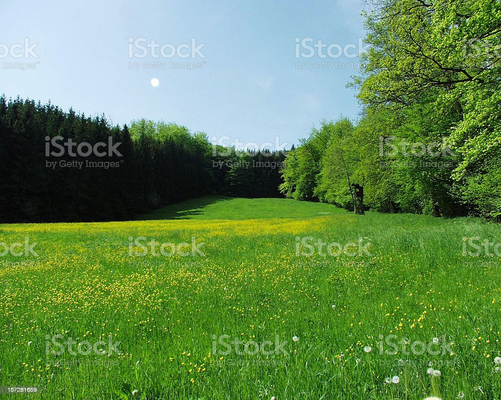 Green yellow meadow with surrounding forest. royalty-free stock photo