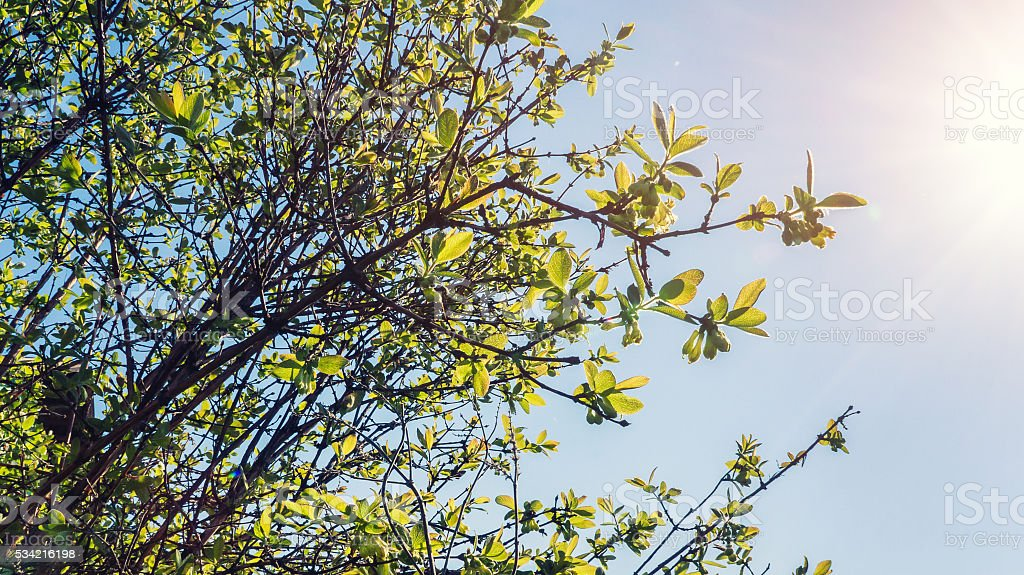 Green young leaves and sun foto de stock royalty-free
