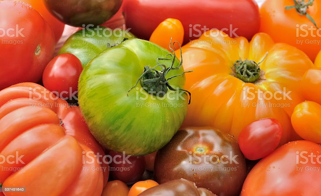 green zebra with other tomatoes stock photo