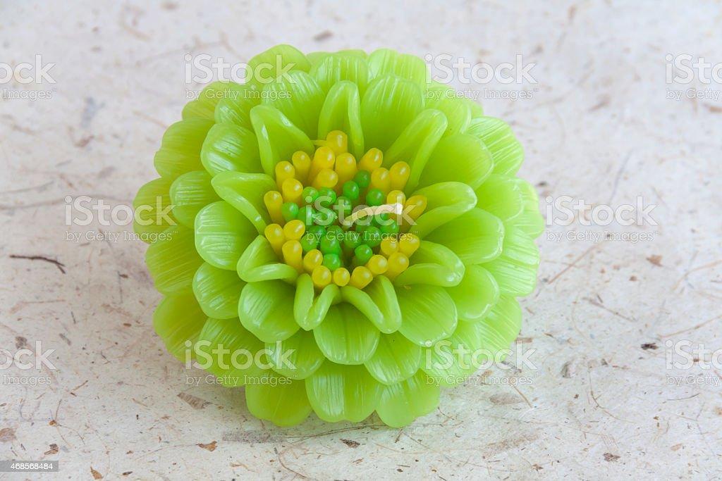 Green Zinnia candle flower closeup royalty-free stock photo