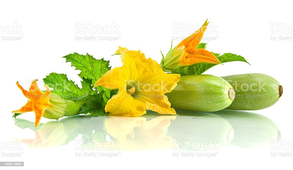 Green zucchini leaves and flower stock photo
