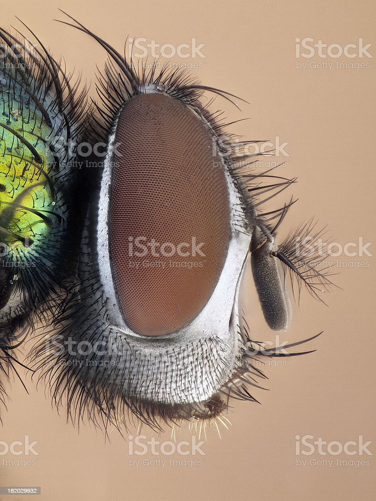 Greenbottle royalty-free stock photo