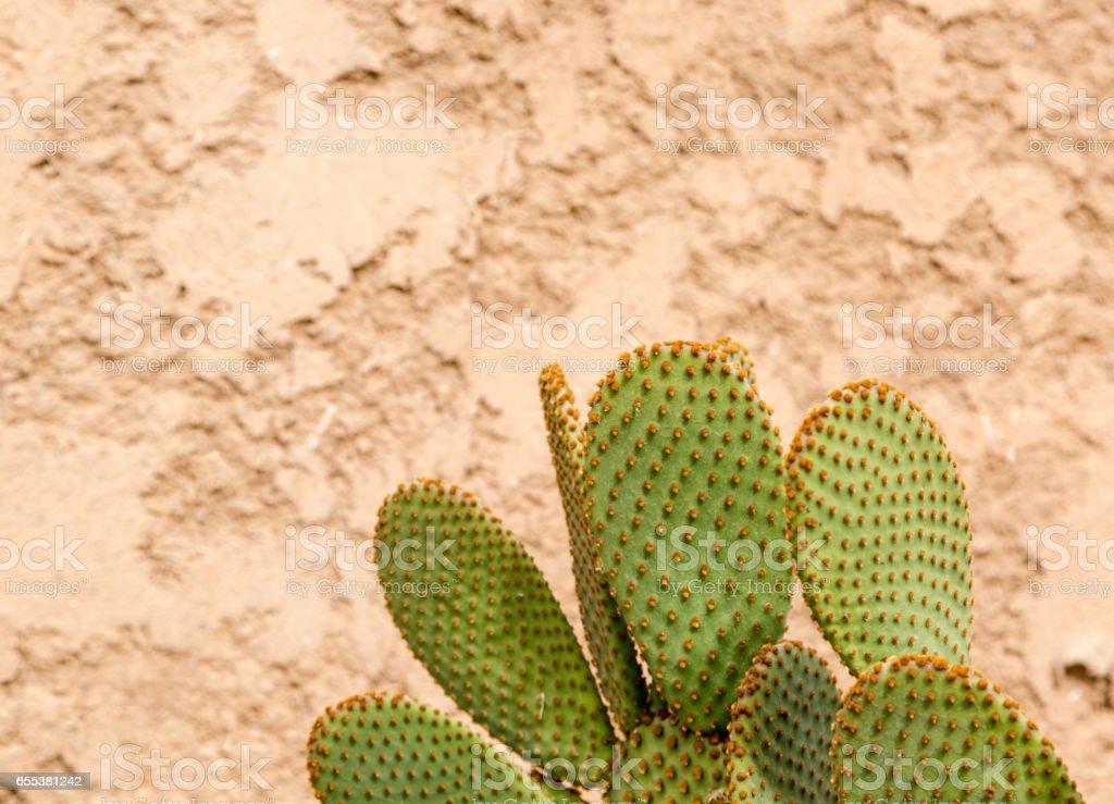 Greencactus on golden background stock photo