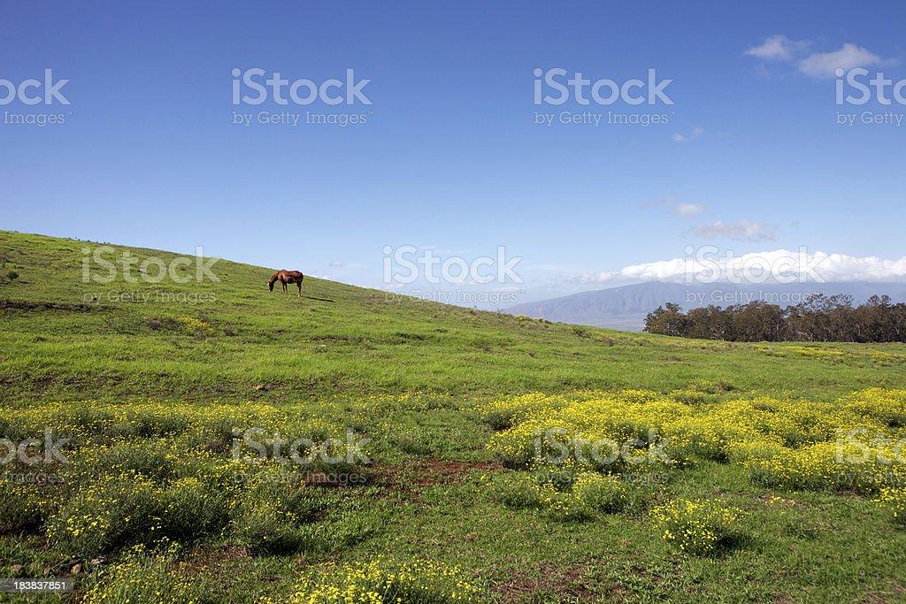 Greener Pastures royalty-free stock photo