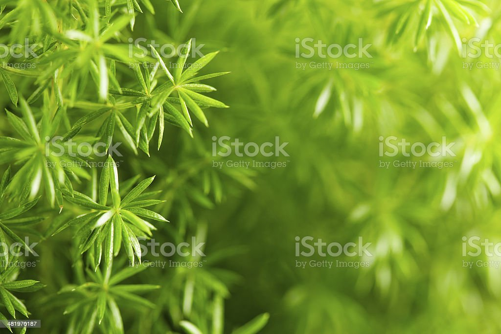 Greenery Background stock photo