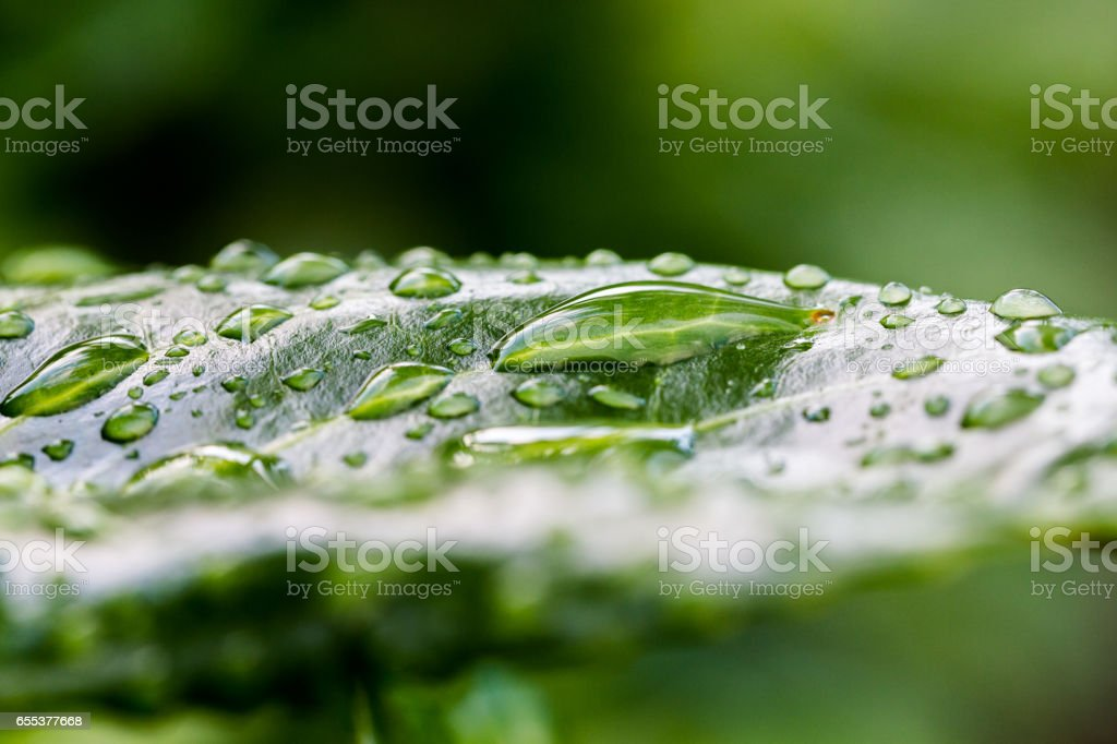 Greenery fresh natural plants backgrounds stock photo