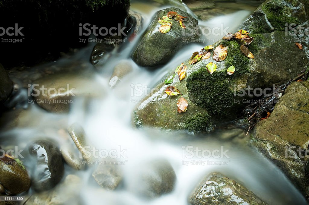 greenery on stone by the river stock photo