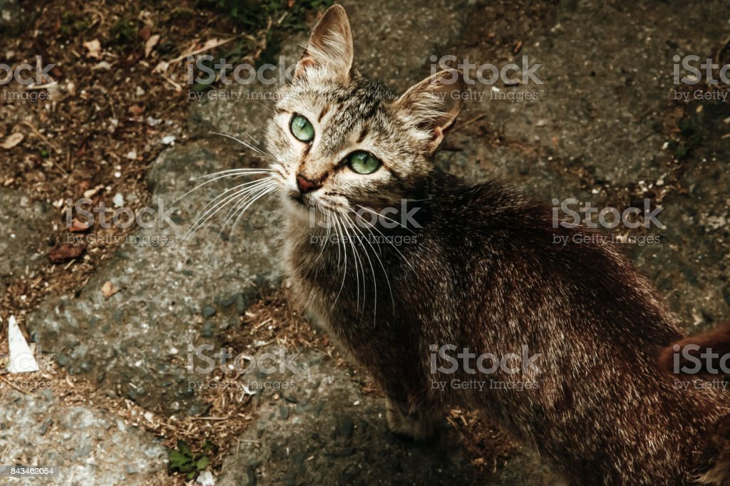 Green-eyed cat stock photo