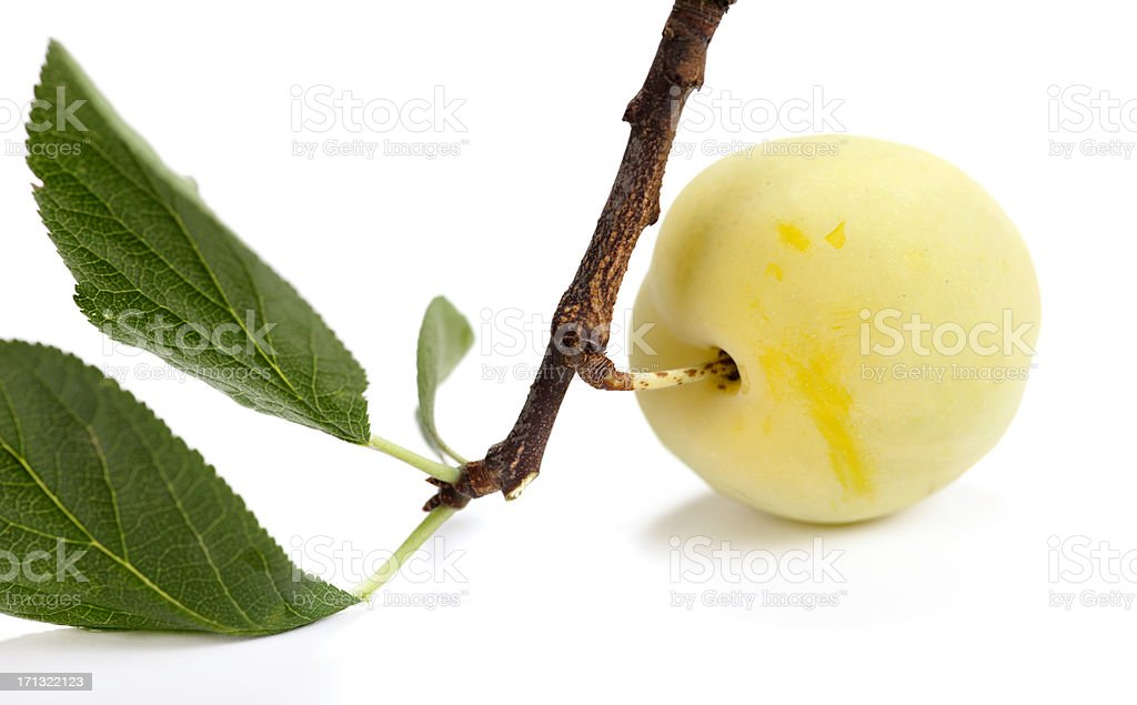 Greengage on branch stock photo