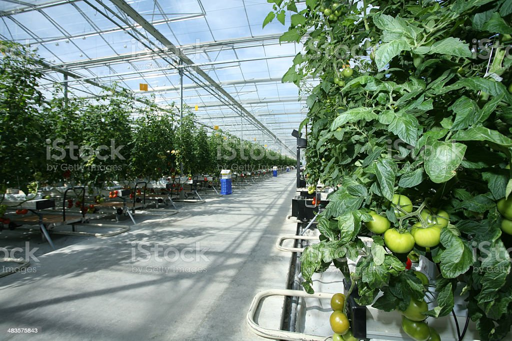 Greenhouse: Agricultural Building royalty-free stock photo