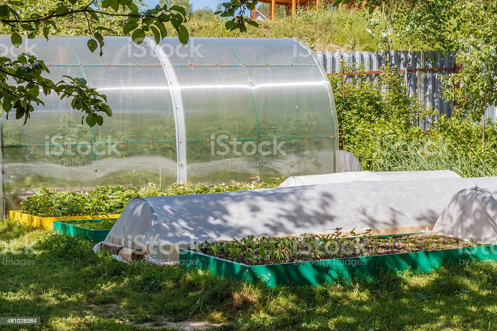 Greenhouse and  seedbed  in the vegetable  garden. stock photo
