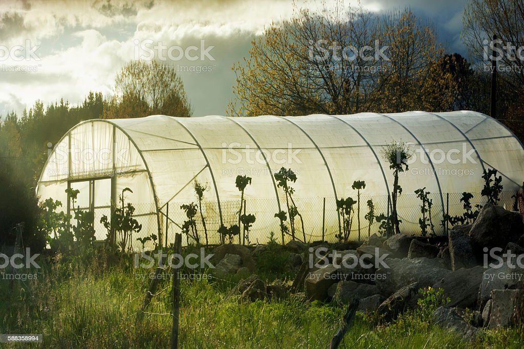Greenhouse backlit, evening sunbeam. stock photo