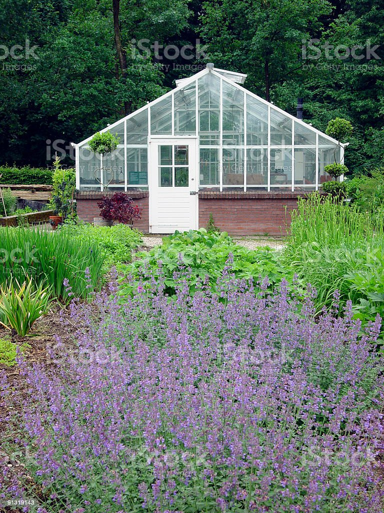 Greenhouse behind a bed of blooming catmint royalty-free stock photo