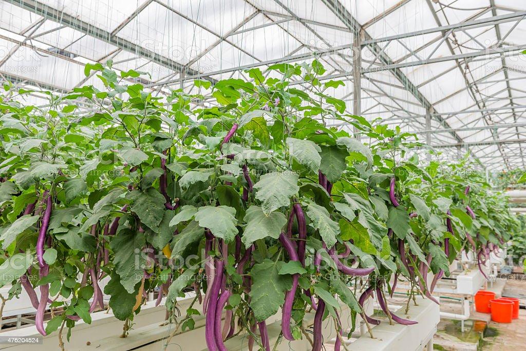 Greenhouse Culture stock photo