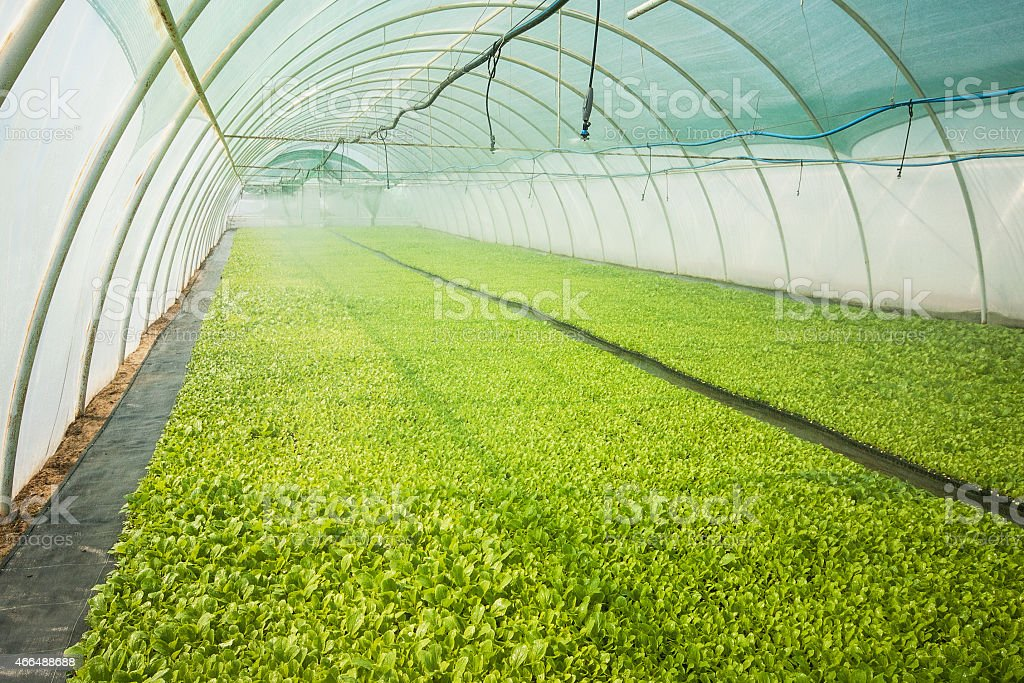 A greenhouse filled with green plants stock photo