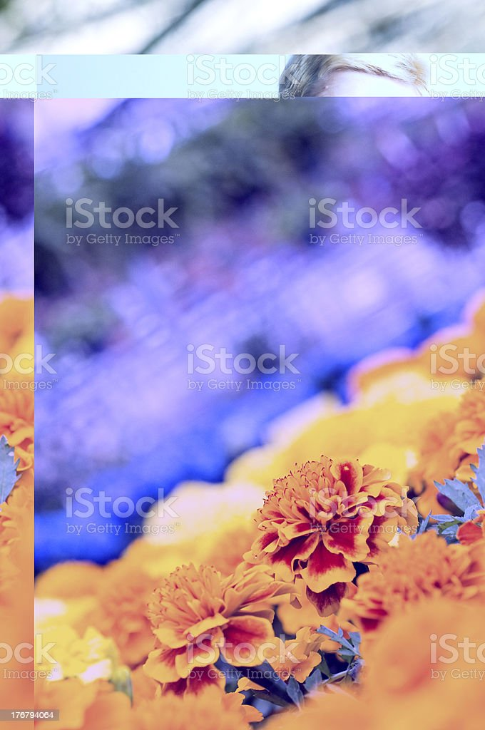 Greenhouse, Flowers in Bloom royalty-free stock photo
