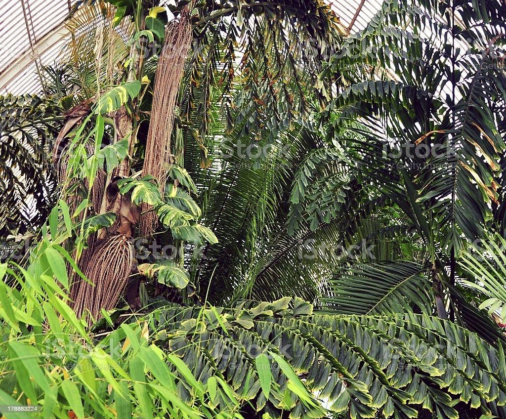 Greenhouse foliage royalty-free stock photo