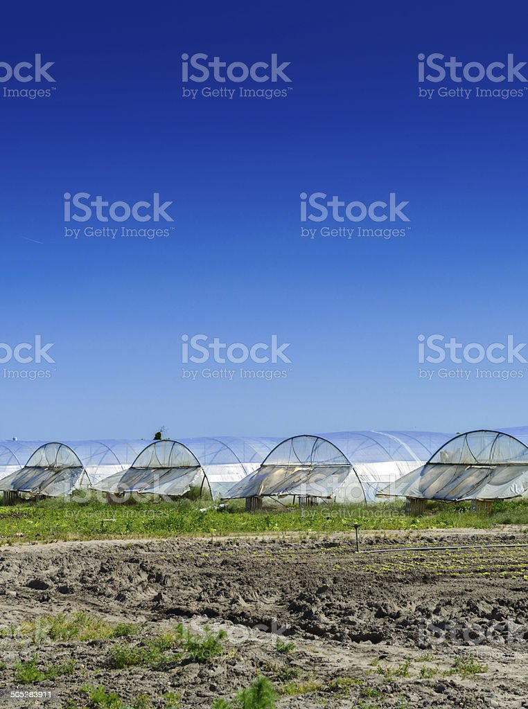 greenhouse for growing fruit and vegetables royalty-free stock photo