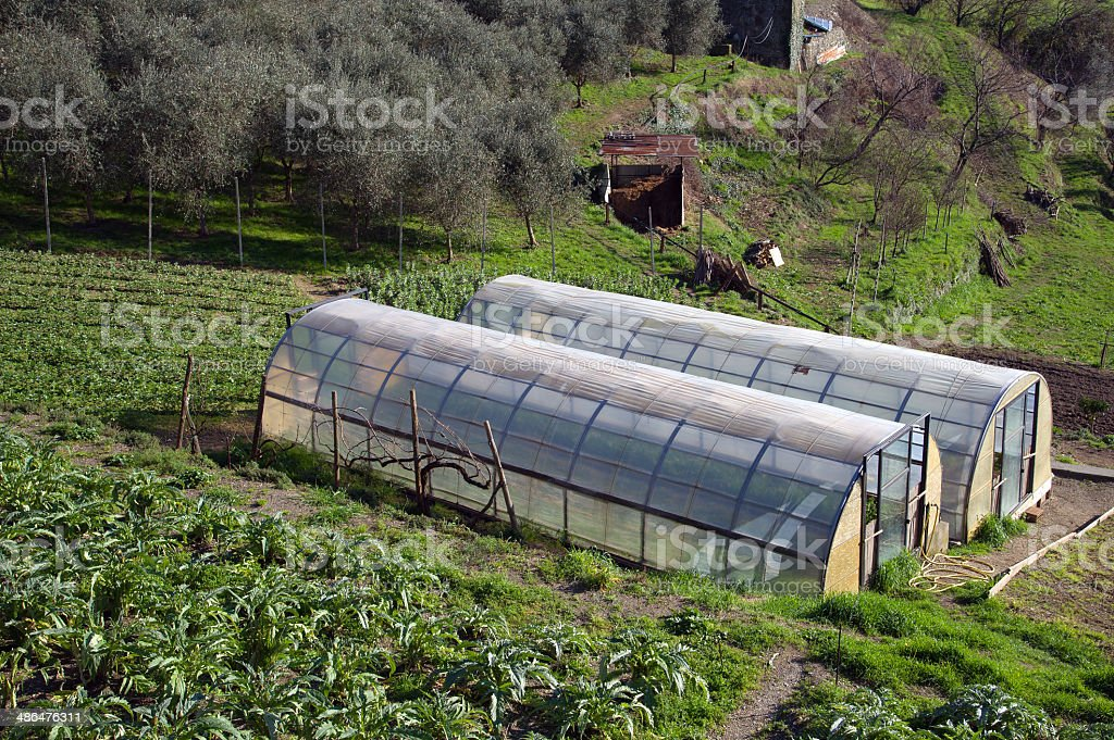 Greenhouse for the cultivation of salad royalty-free stock photo