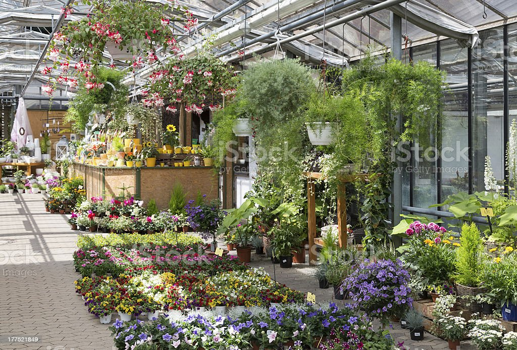 Greenhouse full of plants for sale in the garden center  stock photo