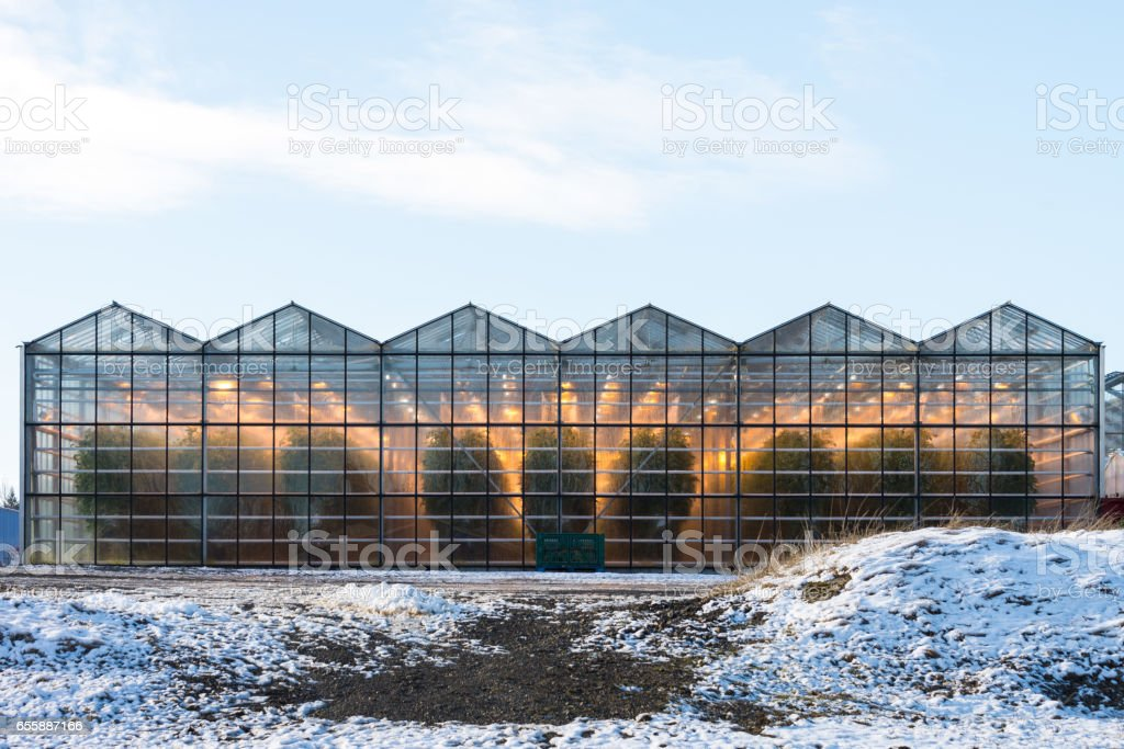 Greenhouse iceland stock photo