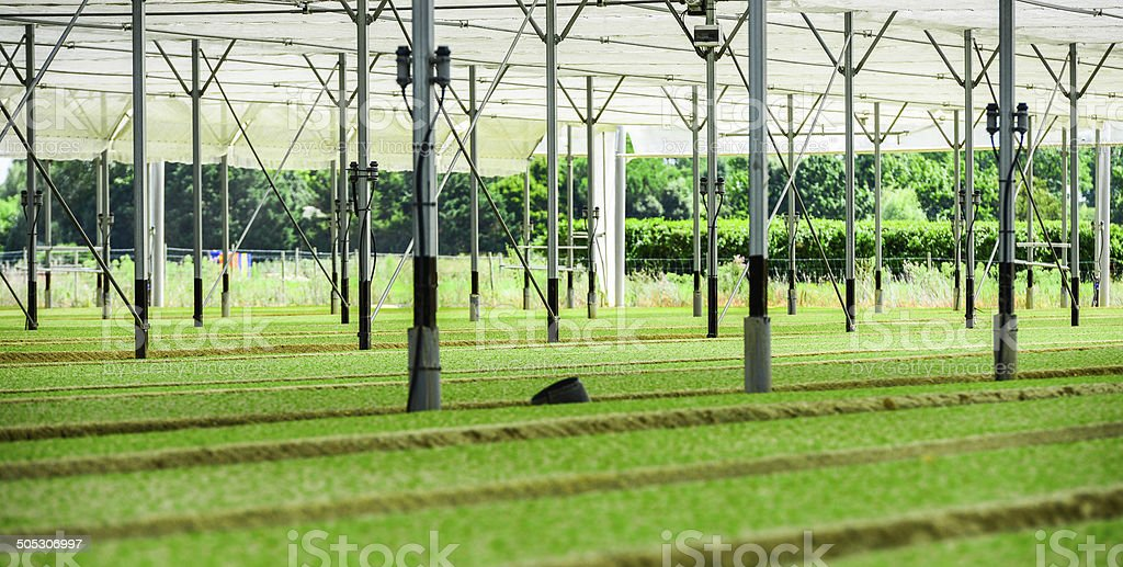 Greenhouse Incubator of the salad chews royalty-free stock photo