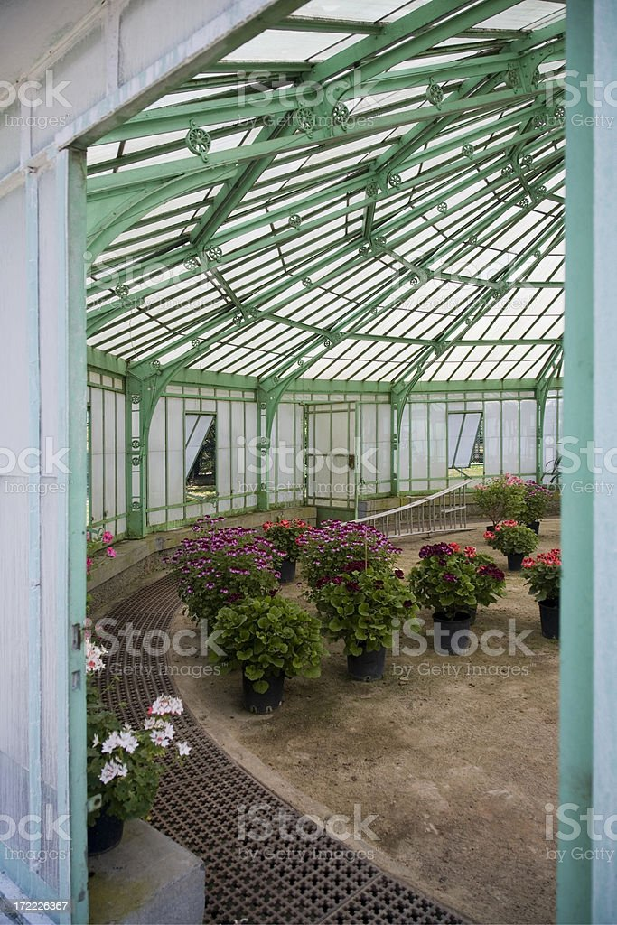 Greenhouse interior with flowers royalty-free stock photo