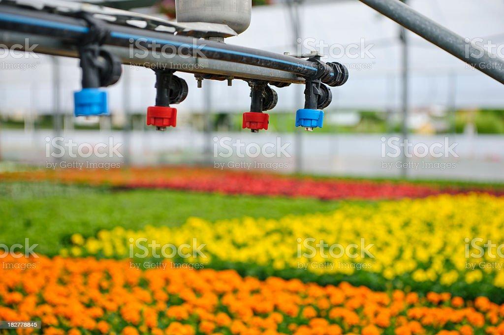Greenhouse Irrigation royalty-free stock photo