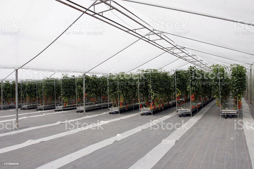 greenhouse modern agriculture stock photo