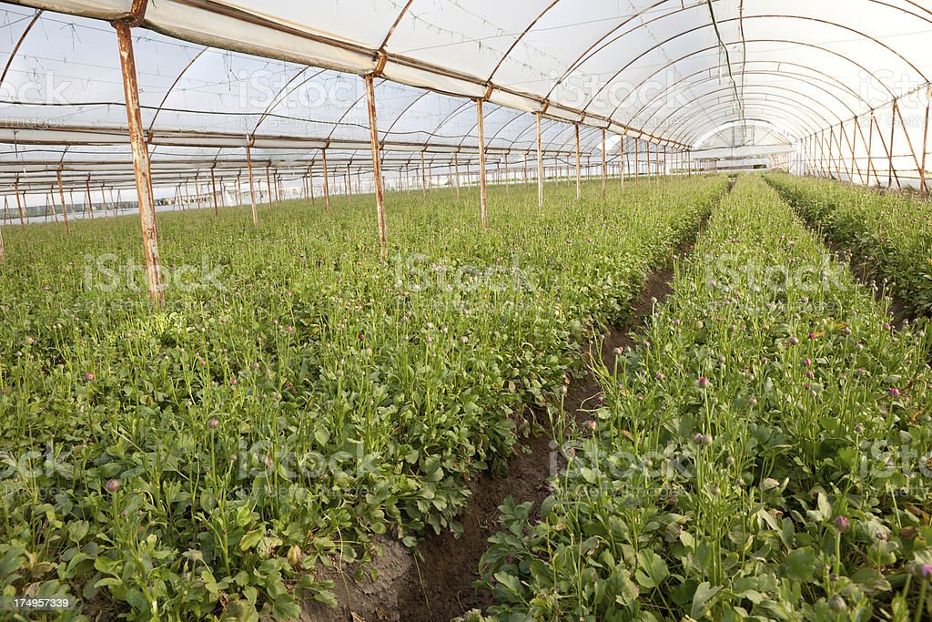 Greenhouse of flower bed royalty-free stock photo